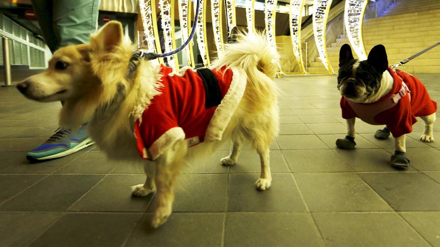 moda-navidena-para-mascotas