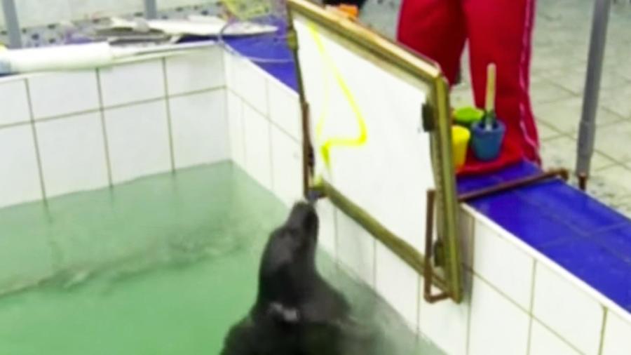 foca pintando en alberca