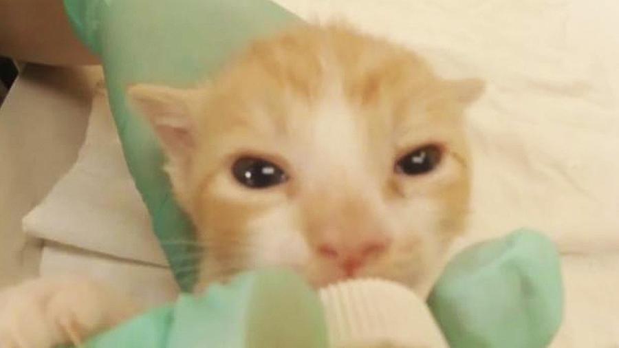 gatito tomando leche biberon