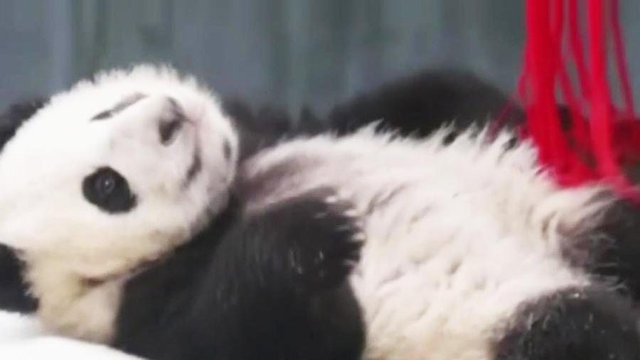 oseznos panda