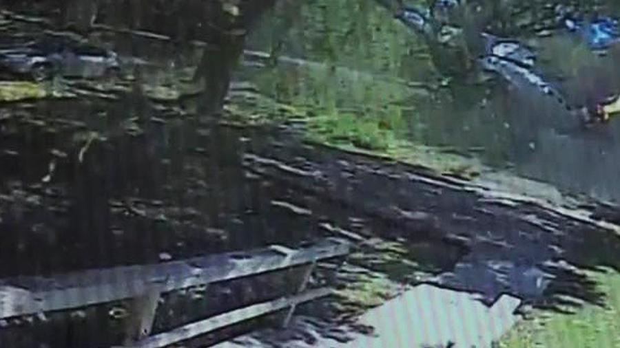 avion se estrella contra arbol
