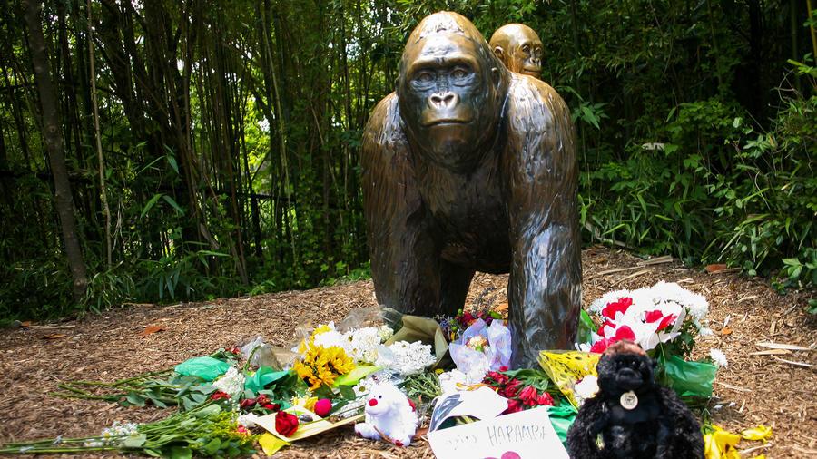 gorila de zoo en ohio