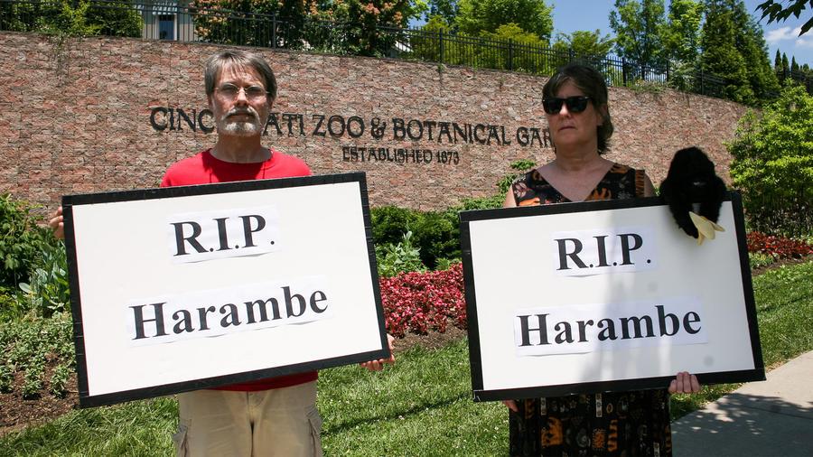 protestan por muerte de gorila