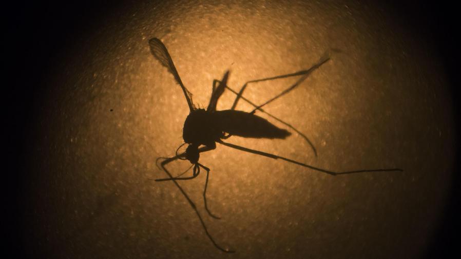 En el epicentro del virus del Zika en Miami