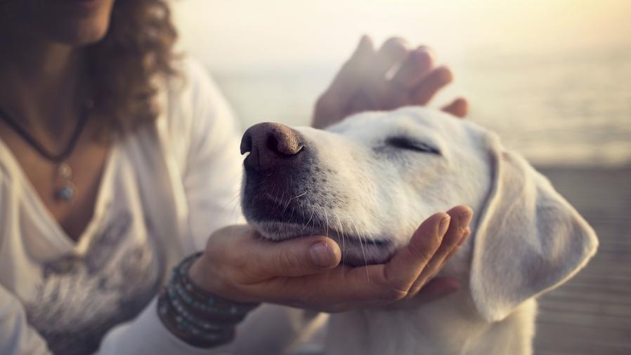 Mascotas contra la soledad
