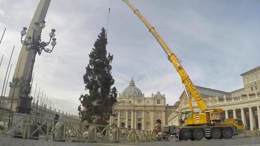 Una grua ubica el arbolito de navidad del vaticano.