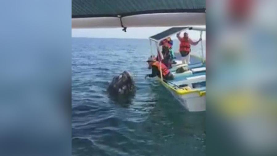 ballena se deja besar