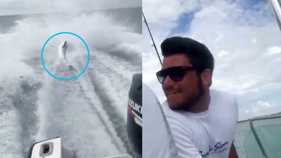 Tiburón arrastrado por bote