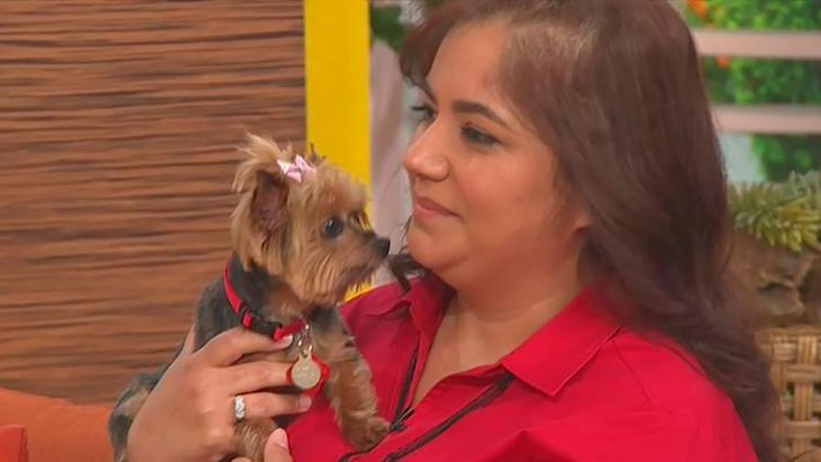 Las mascotas también son víctimas de los desastres naturales, ¡aprende cómo protegerlos!