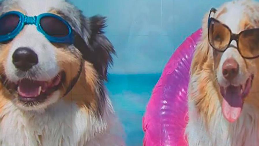 Te llevamos a la celebración de Feria de Mascotas Famosas en Internet en Nueva York