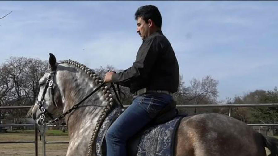 Encantador de caballos