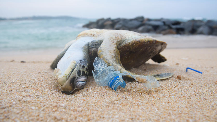 Dead sea turtle among ocean plastic waste