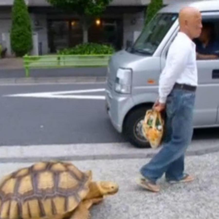 japones paseando con su tortuga por tokio