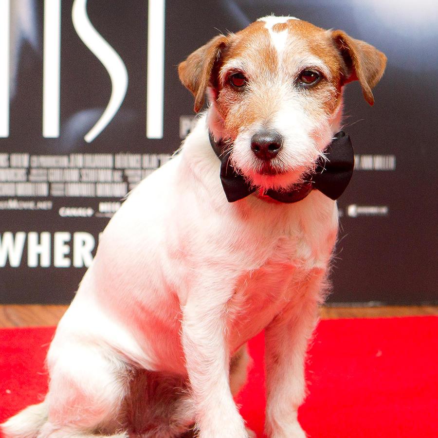"""En esta foto del 10 de enero del 2012, el perro Uggie, de la película """"The Artist"""", llega a una función especial del filme en Londres."""