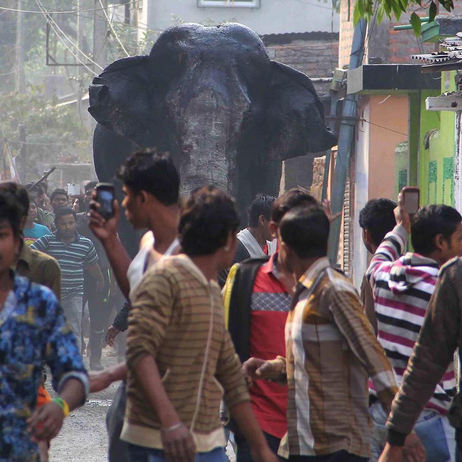 elefanta salvaje estampida en la india