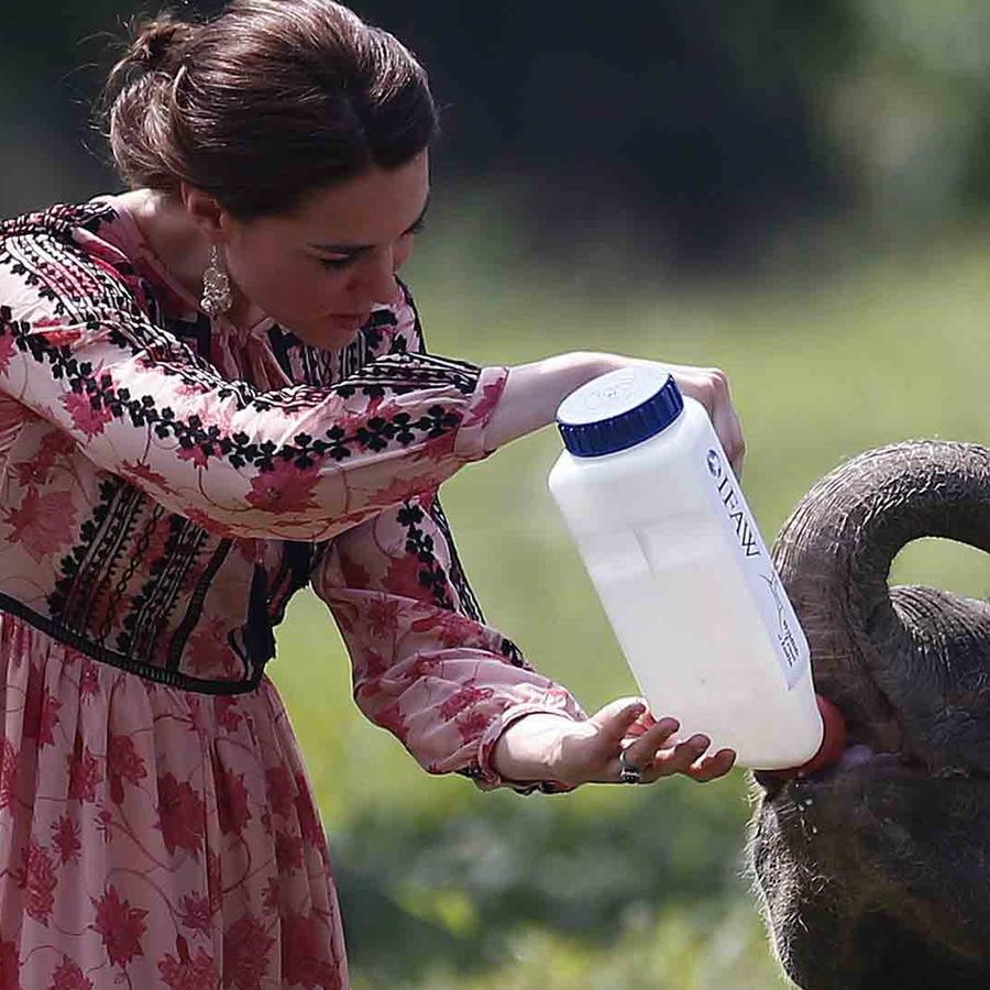 Kate Middleton alimentando a un elefante en India