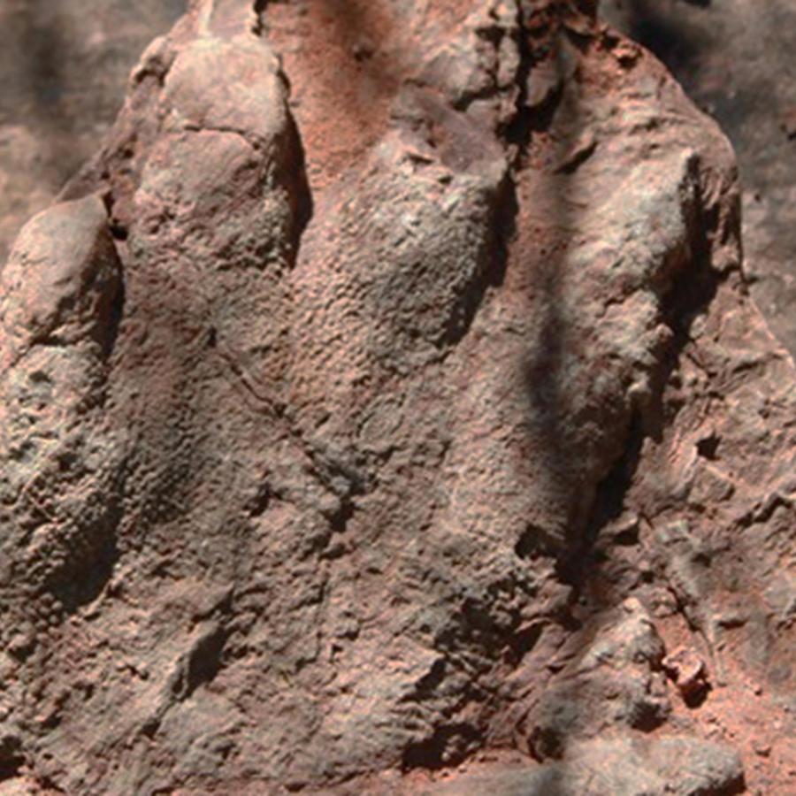 Fotografía difundida por la Dirección General de Comunicación del Gobierno de Cataluña el lunes 2 de mayo de 2016, en la que aparece una huella de un dinosaurio que vivió hace 230 millones de años en Olesa de Montserrat, al norte de Barcelona