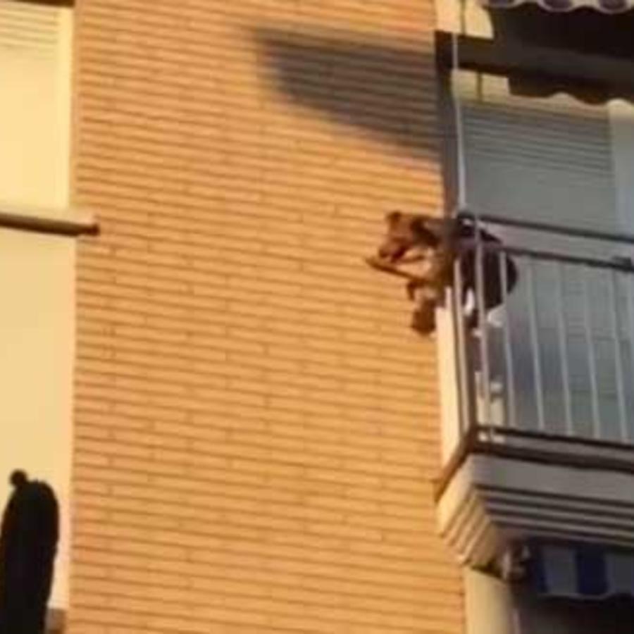 perro en un balcon