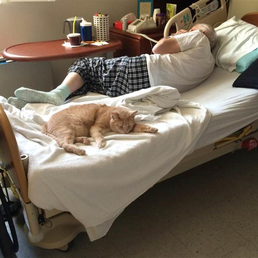 El gato Tom en el hospital de veteranos de Salem