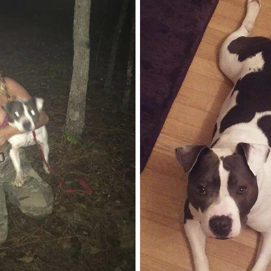 Militar mató a su perro.