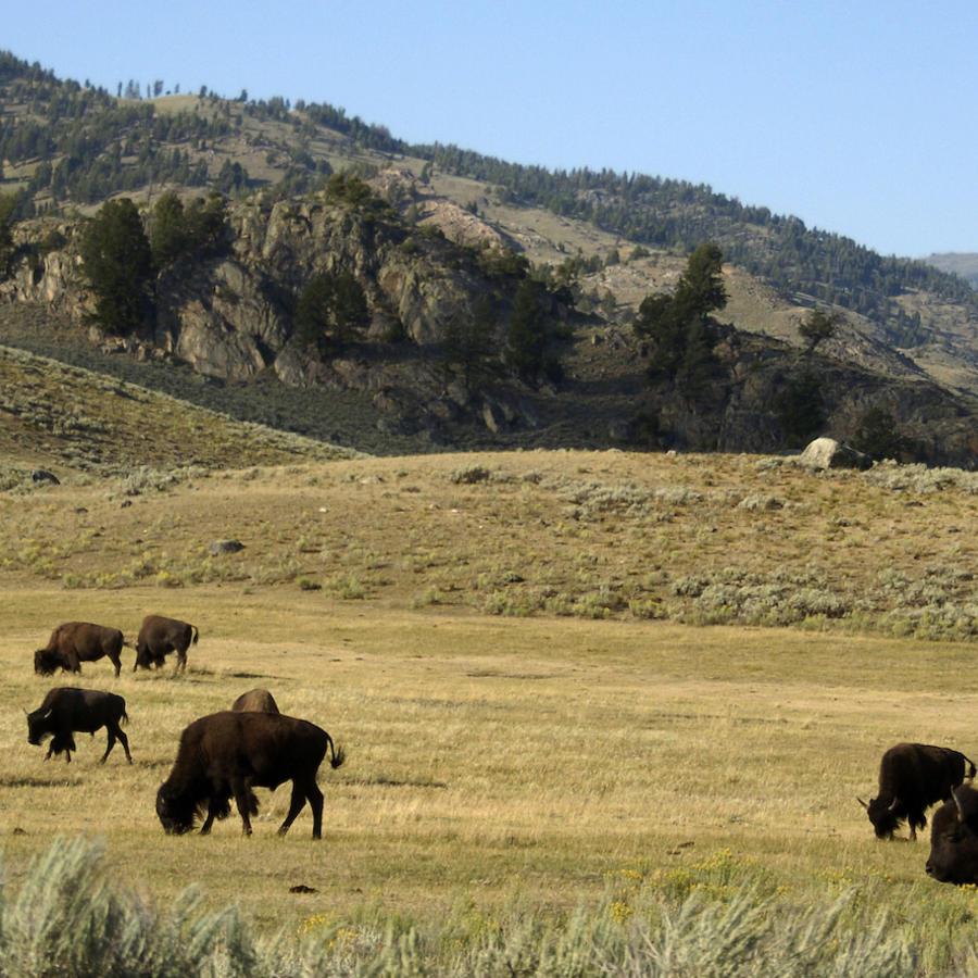 Imagen de archivo de Lamar Valley, en el parque nacional de Yellowstone.