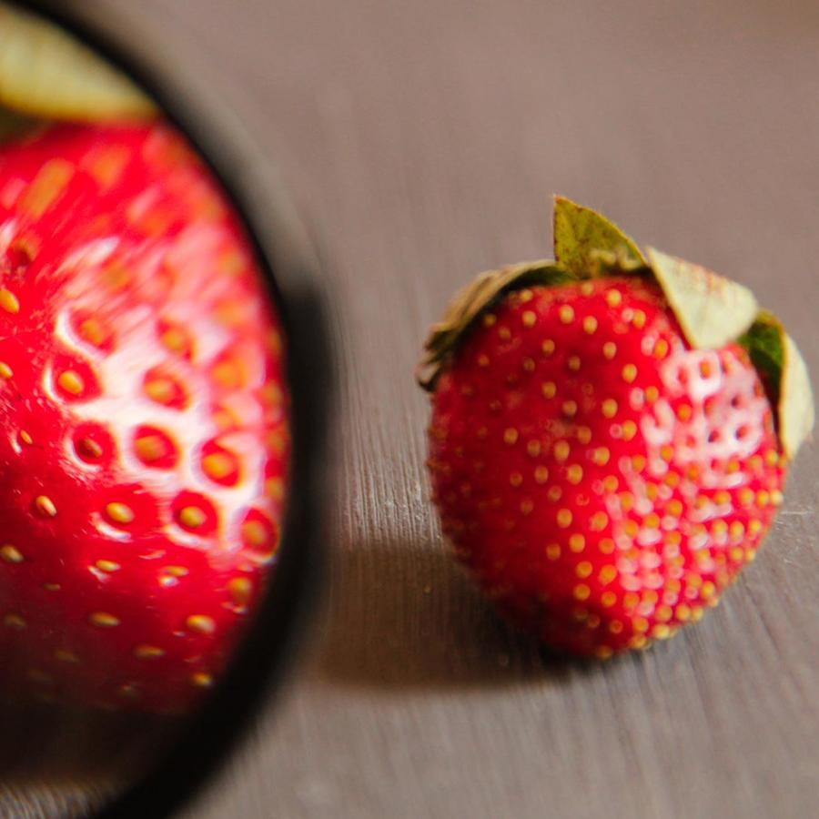 Fresas miradas con lupa