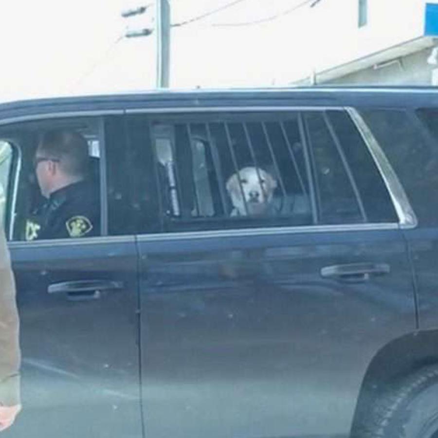 perro arrestado