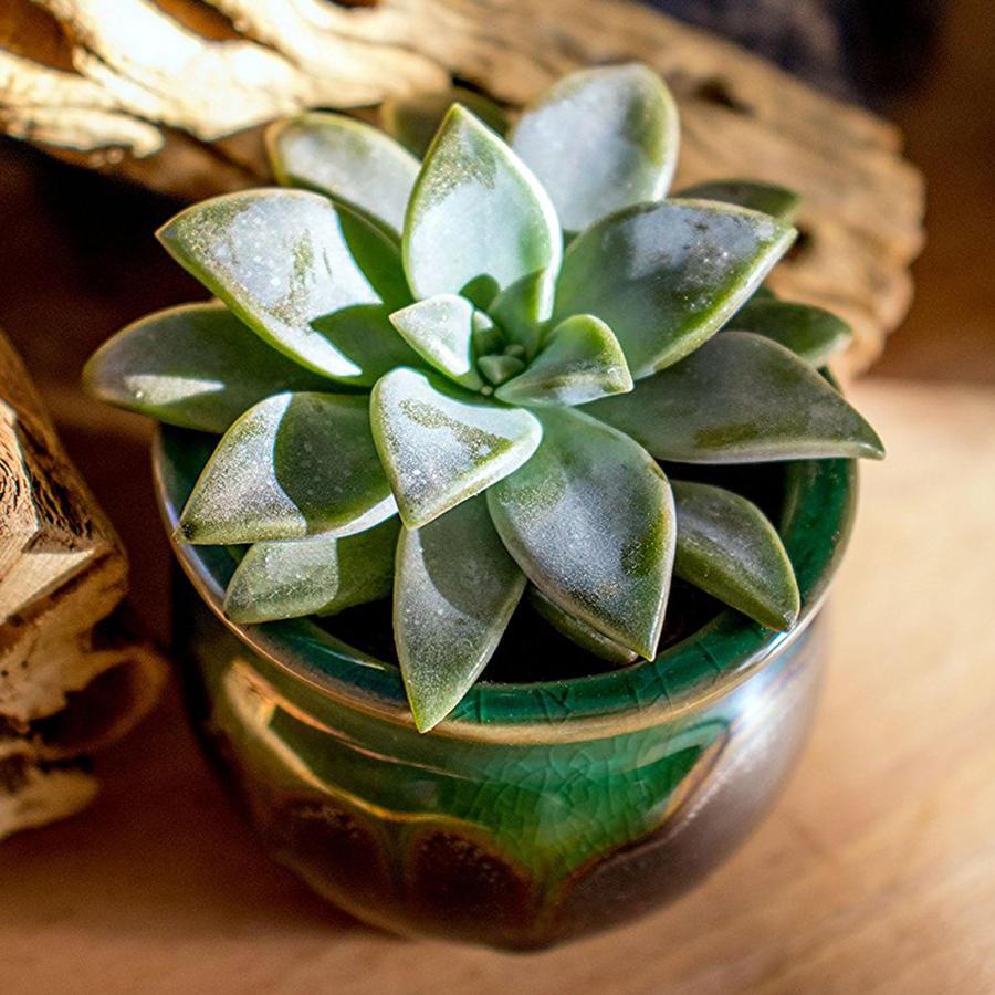 Plantas de decoración que refrescarán tu casa