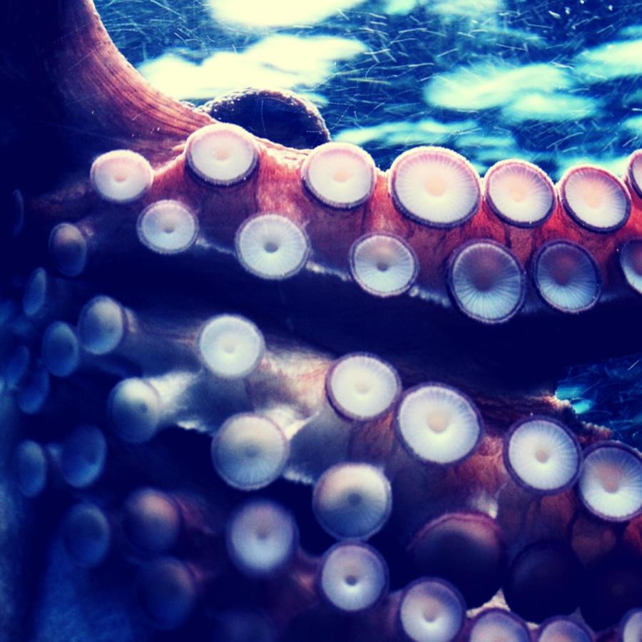 En las conchas que recolectó la familia Pix en la playa de Quindalup (Australia) habitaba una de las criaturas más peligrosas del océano.