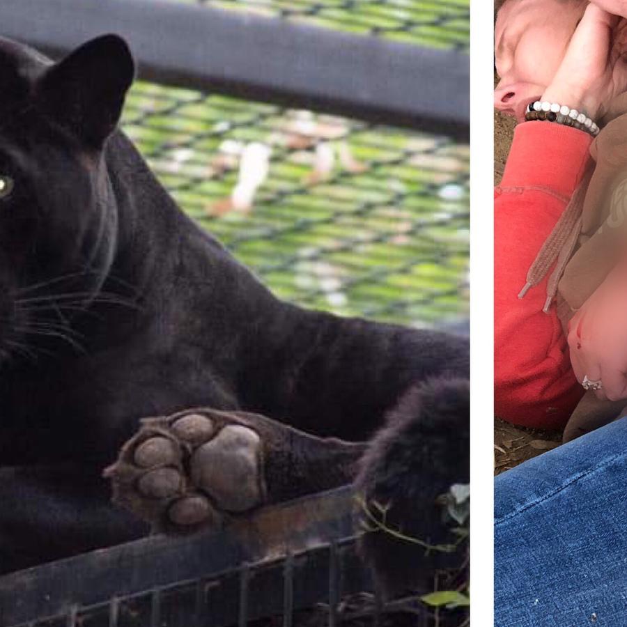 Jaguar Sarah