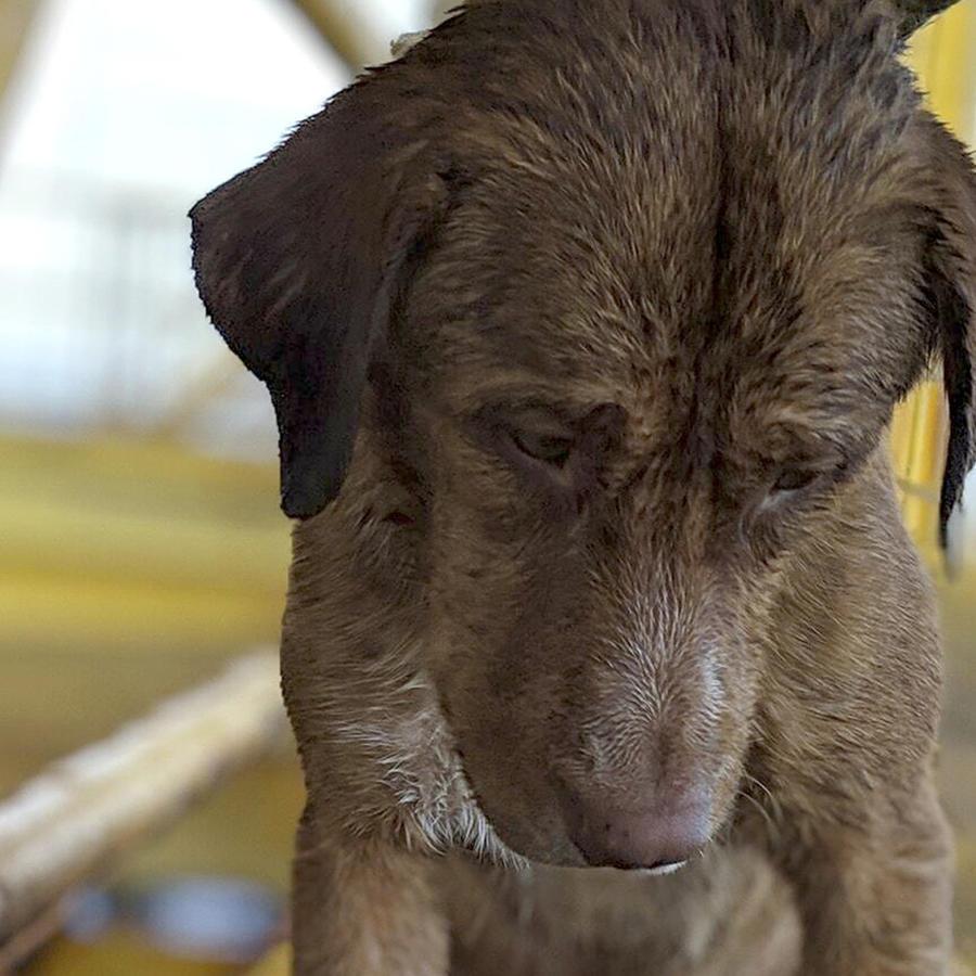 Bautizan como Boon Rod o Sobreviviente a perro rescatado en Tailandia