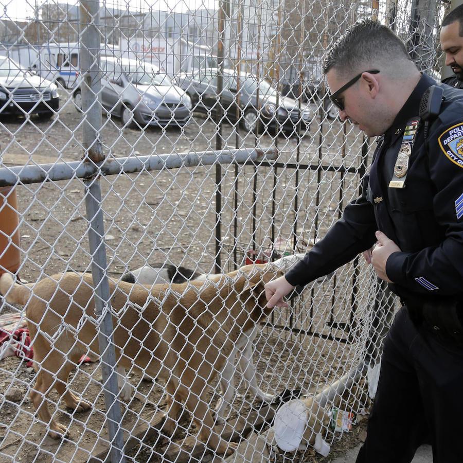 Imagen de archivo de policías con perros.