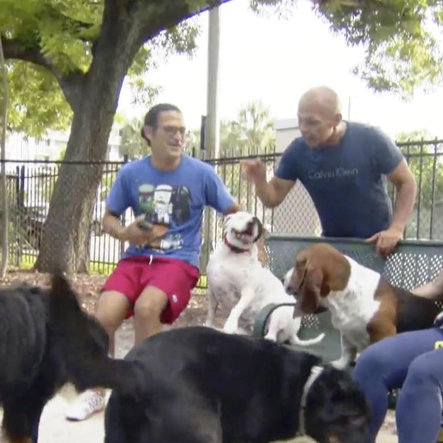Vida con perros
