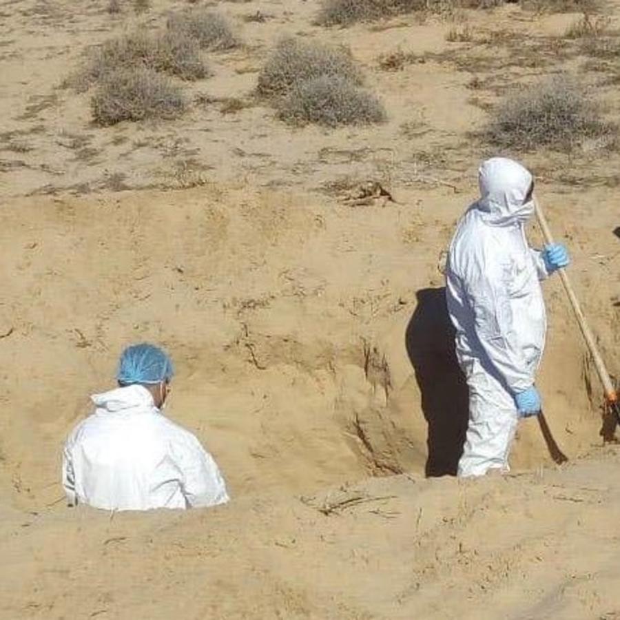 Peritos buscan este sábado restos humanos en una fosa en el estado de Sonora, México.