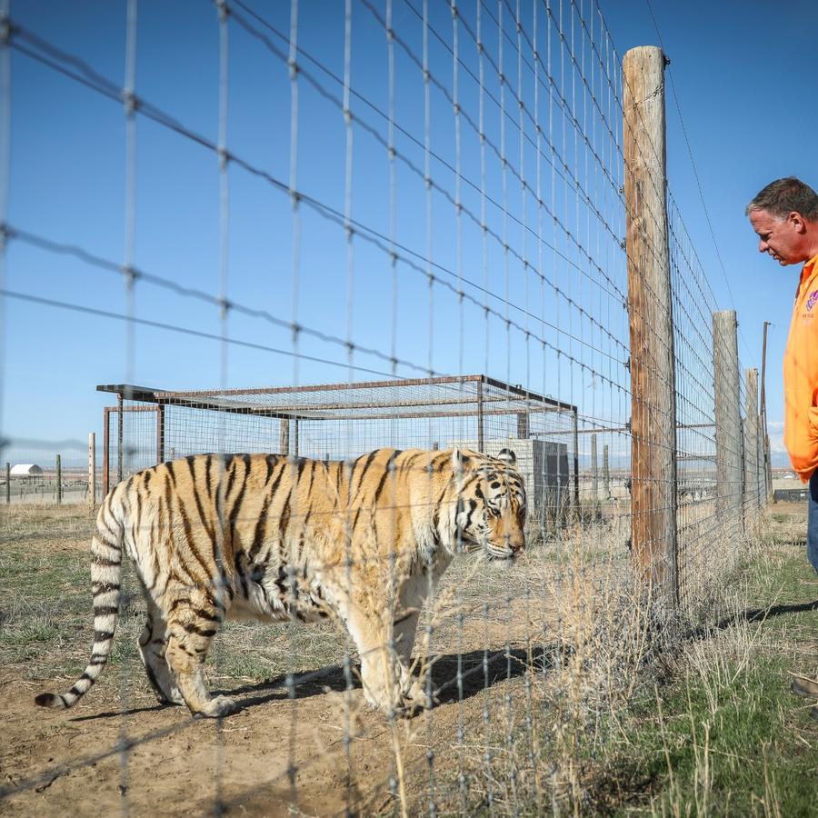 """""""Tiger King"""": El último fenómeno de Netflix que enloquece al público de EE.UU"""