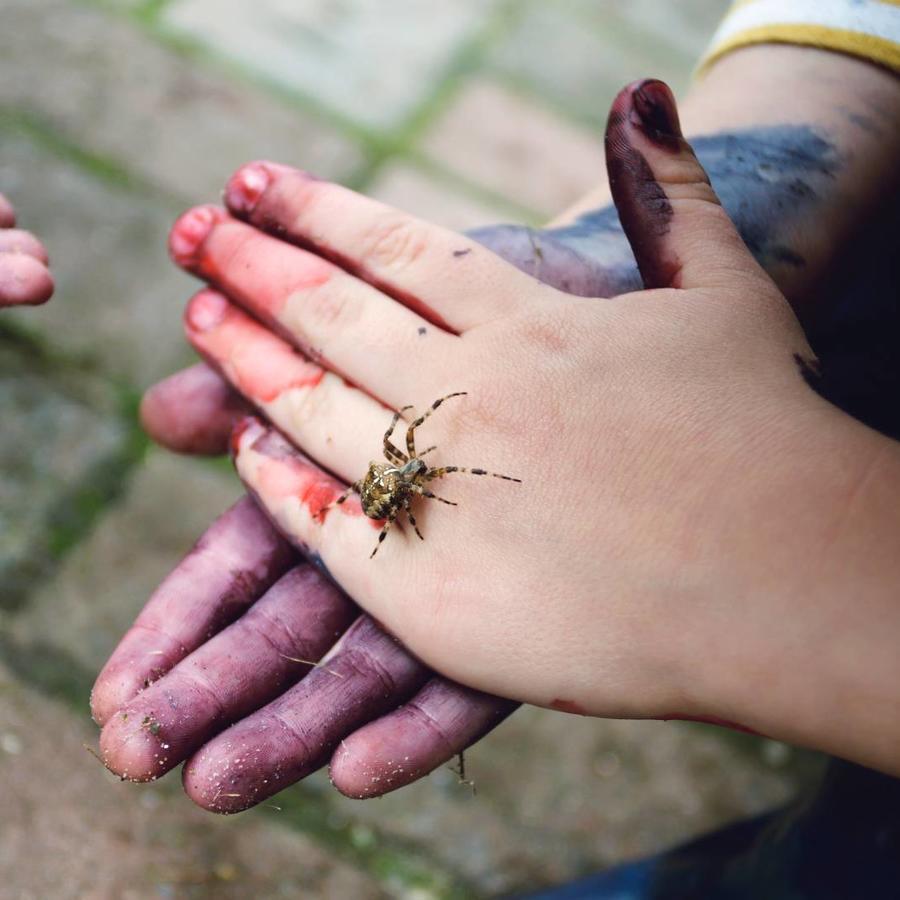 Niños jugando con una araña