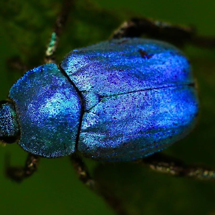 Escarabajo para crear aviones