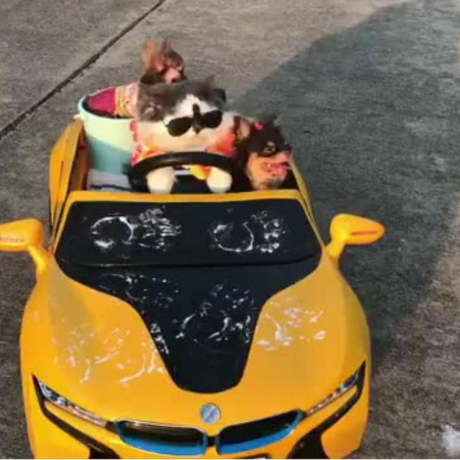Gato conduciendo un auto
