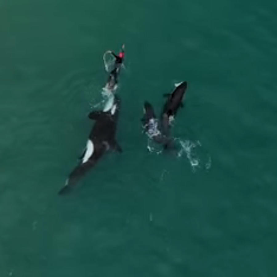 Nadadora con orcas