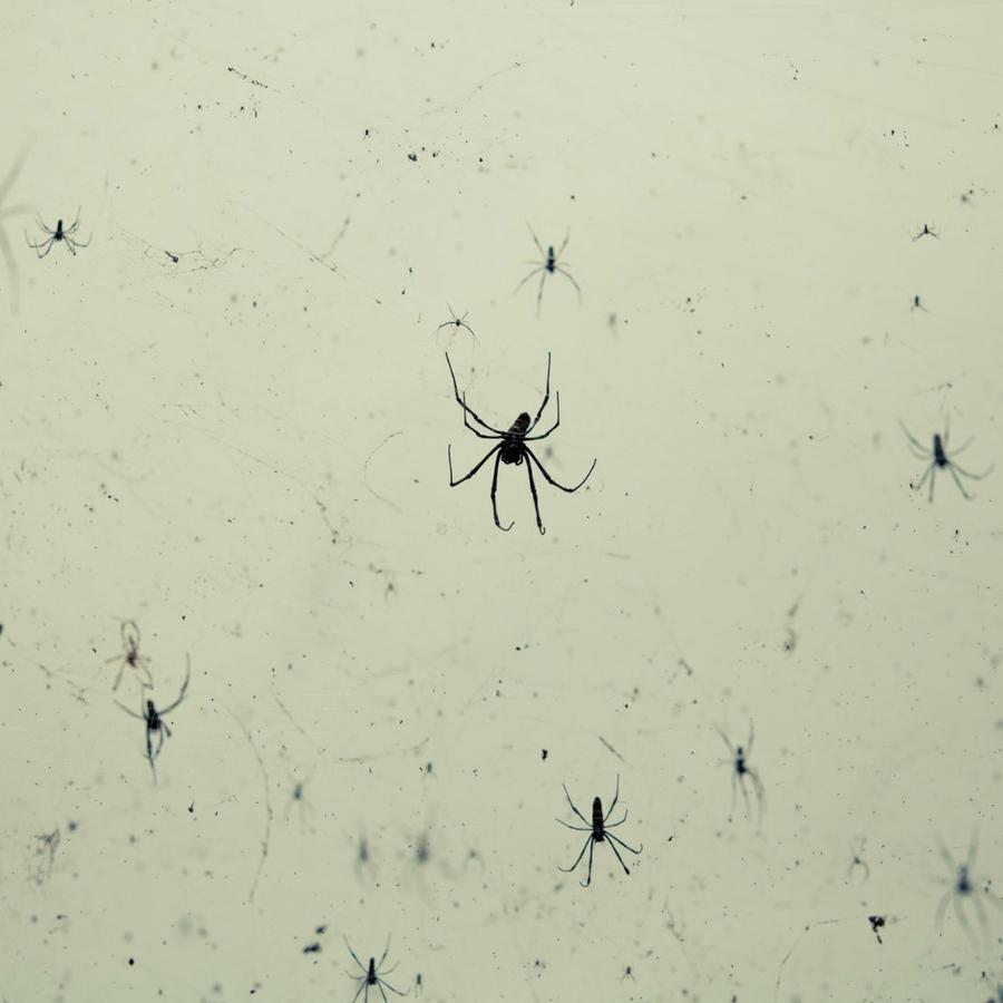 Lluvia de arañas