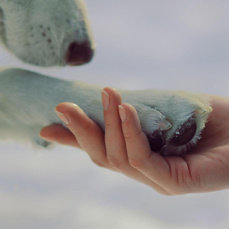 Frío extremo: cómo cuidar a tus mascotas