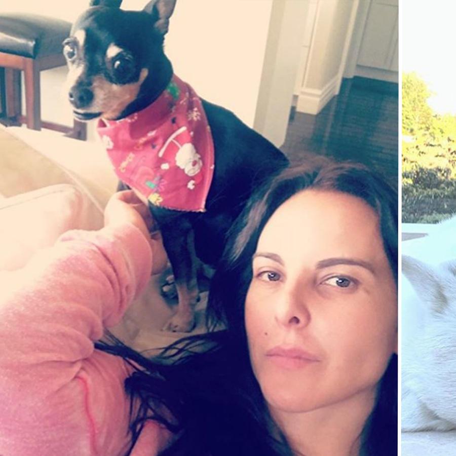Famosos con sus perros