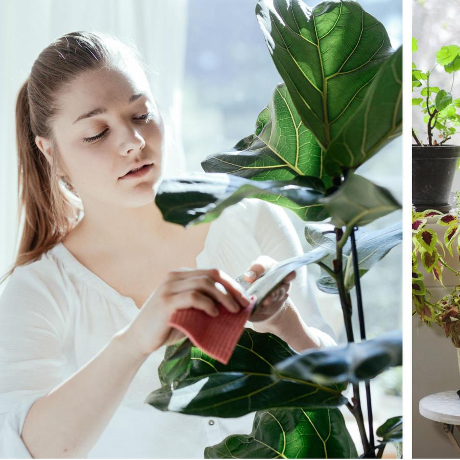 Mujer decorando su hogar con plantas