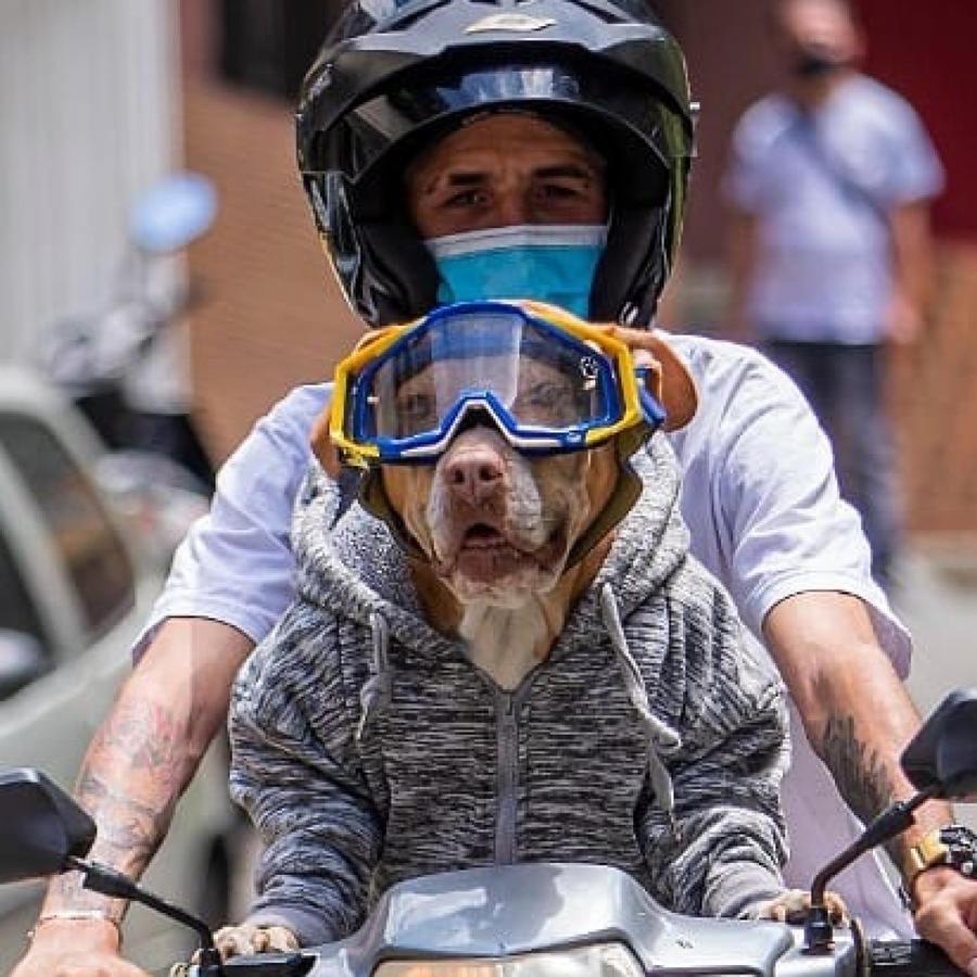 Perra Natacha conduce moto en Colombia