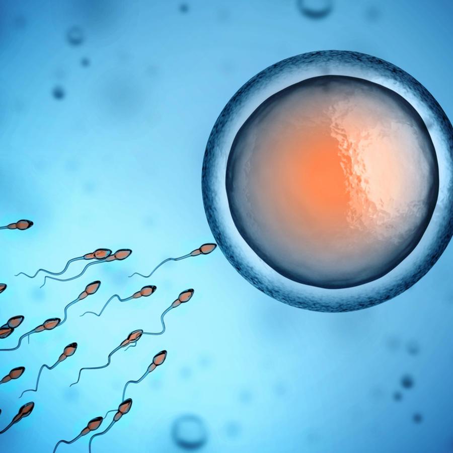 Esperma llegando al óvulo