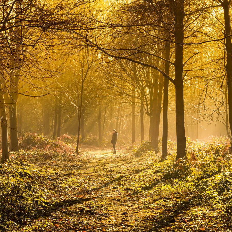 Mujer perdida en el bosque