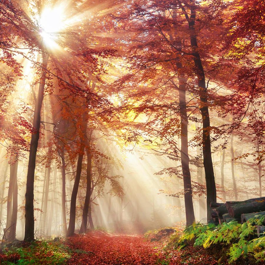 Sol otoñal filtrándose entre los árboles