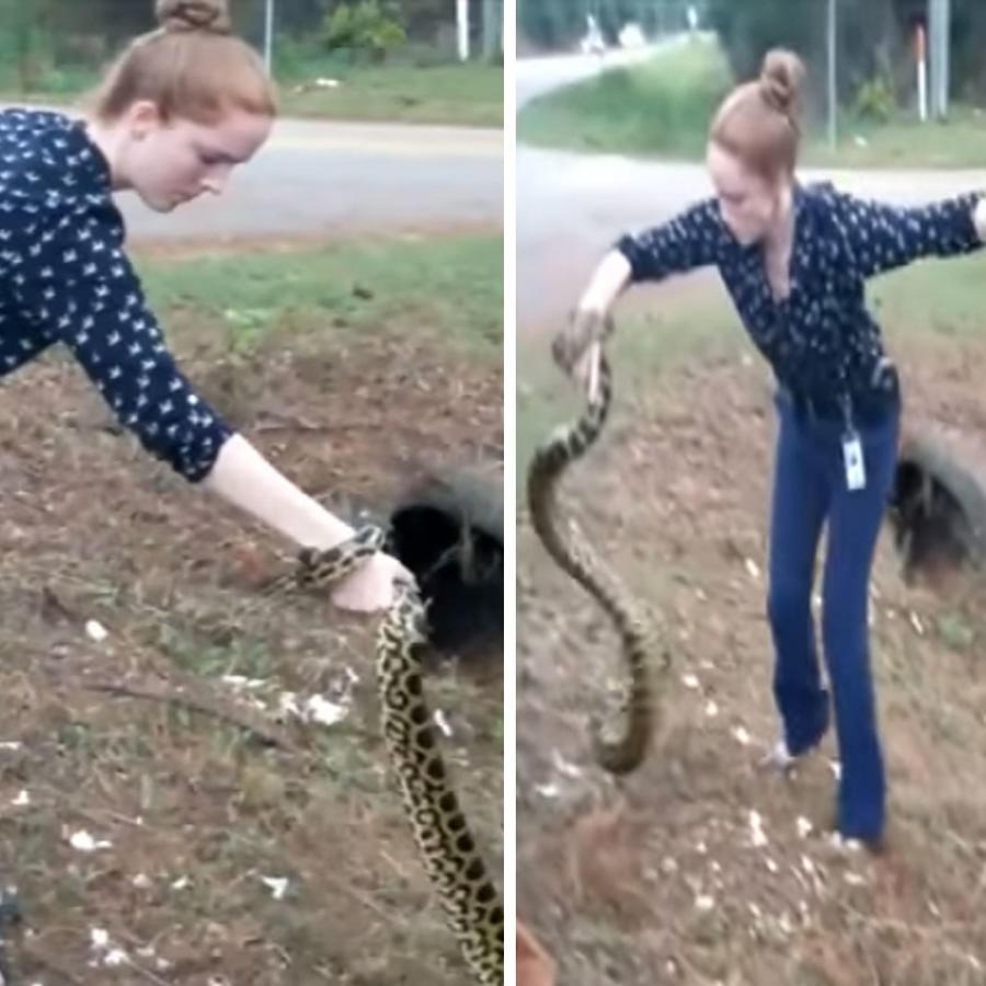 Joven captura a una anaconda de tres metros con sus propias manos (VIDEO)