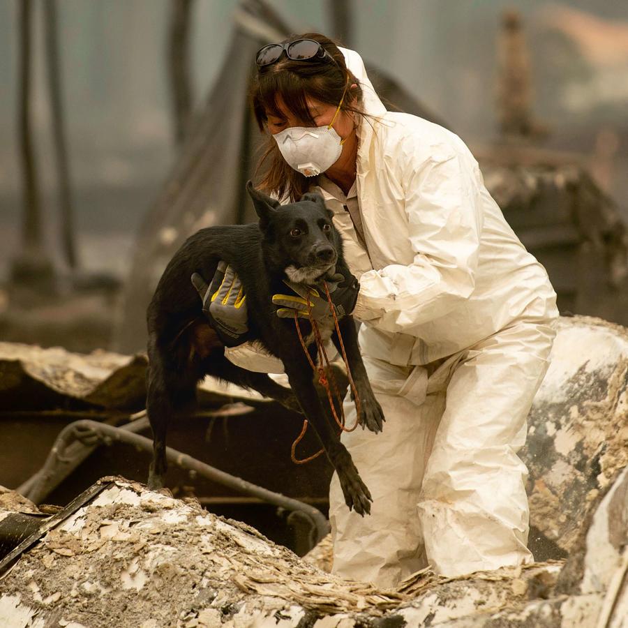 Una trabajadora de búsqueda y rescate, en busca de las víctimas del Camp Fire
