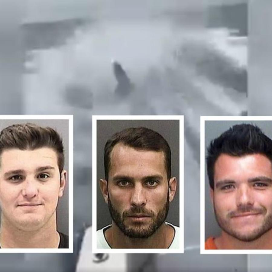 Sentenciados por maltratar a un tiburón